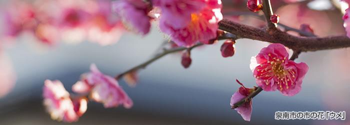 泉南市の市の花「ウメ」